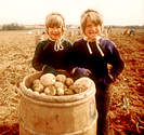 Maine Potato Girls